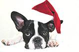 Silvester feiern mit Hund